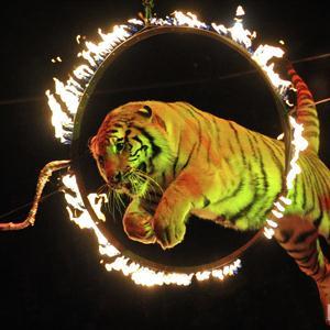 Цирки Адыгейска