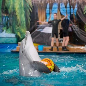 Дельфинарии, океанариумы Адыгейска
