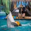Дельфинарии, океанариумы в Адыгейске