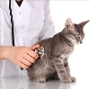 Ветеринарные клиники в Адыгейске
